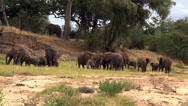 Stock Video Footage of Elephant herd and behavior