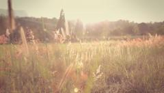 A field of feather grass at sunset Stock Footage