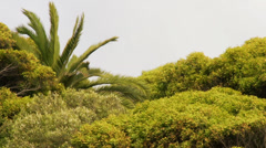 Trees on windy day Stock Footage