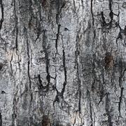 gray seamless texture white tree bark wallpaper background your - stock photo
