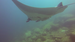Manta Ray from behind Stock Footage