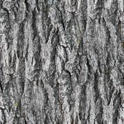 seamless texture gray white tree bark - stock photo