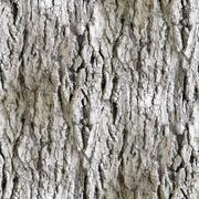 seamless texture white tree bark wallpaper background - stock photo