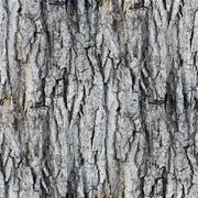 Seamless texture white tree bark wallpaper gray Stock Photos