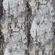Birch tree texture seamless background wallpaper Stock Photos