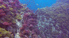 Beautiful colourful coral reef Stock Footage