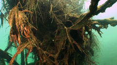 Underwater tree in quarry Stock Footage