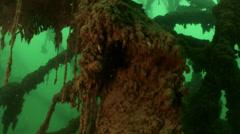 Underwater huge trees Stock Footage