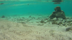 Blue underwater surface with small fish, Adriatic, Croatia HD Stock Footage