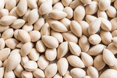 ginkgo biloba dried seeds - stock photo