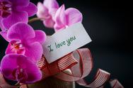 Stock Photo of phalaenopsis line with a declaration of love