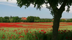 Beautiful Poppy Field - Mecklenburg-Vorpommern - Northern Germany Stock Footage