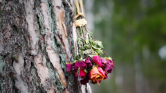 Bouquet of dried roses Stock Footage