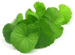 Medicinal thankuni leaves Stock Photos