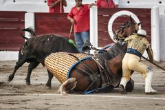 brave bull of black color and 640 kg knocks down the horse out of the chopper - stock photo