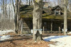 Stock Photo of Old cottage among maple trees