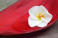 Tropical frangipani Stock Photos