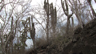 Stock Video Footage of P03135 Galapagos Islands Desert Habitat Santa Cruz Island