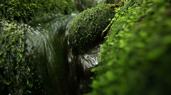 Stream running over stones covered with moss in a forest Stock Footage