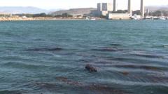 P03181 Sea Otter in Bay in California and Industry Stock Footage