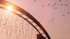 birds swarm. slow motion. beautiful romantic background. sunset. bridge. red sky - stock footage