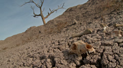 Skull Drought Famine Global Warming  Stock Footage