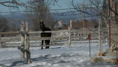 Rural home horse in pasture winter snow zoom HD 0036 Stock Footage