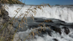 Grass moving in a wind with Gullfoss waterfall as a background, Iceland Stock Footage