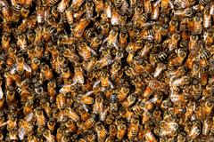 honey bee swarm background - stock photo