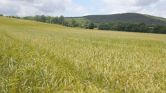 AERIAL: Field in Tuscany Stock Footage