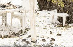 Birds in the Snow Stock Photos
