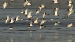 Waders on a beach Stock Footage