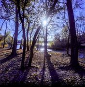 Fall Shadows - stock photo