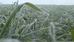 Flying Walking in Winter Hoar Frost Wheat, Running in Harvest Field, Agriculture Stock Footage