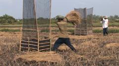 Rice Harvesting Stock Footage