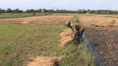 Threshing by Hand Stock Footage