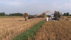 Harvest Time Stock Footage