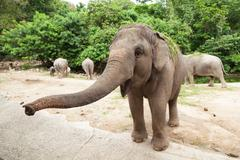 Elephant is asking for food. Stock Photos