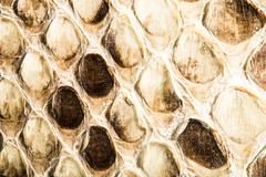 Texture of genuine snakeskin Stock Photos