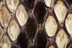 texture of genuine snakeskin - stock photo