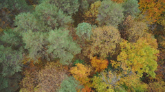 AERIAL: Beautiful autumn forest Stock Footage