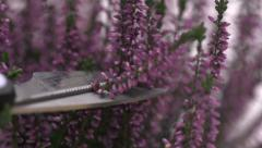 Slow motion cutting heather Stock Footage
