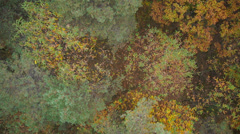 AERIAL: Above the coloorful autumn forest Stock Footage