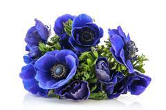 Bouquet blue anemones Stock Photos