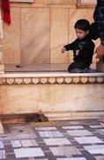 young boy watching rats at karni mata temple, deshnok, india - stock photo