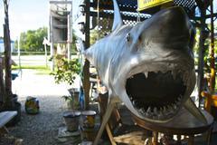 A Shark Greeting - stock photo