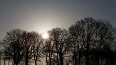 Trees in winter sun Stock Footage