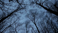 Stock Video Footage of trees in winter