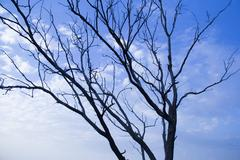 Tree with sky - stock photo