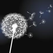 flower dandelion on black background - stock illustration